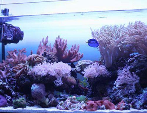 Красивый аквариум – изюминка интерьера