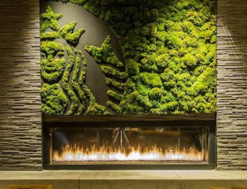 Фитодизайн: зеленая стена на грунте и гидропонике